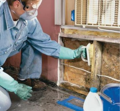 How Remove And Clean Black Mould Build House