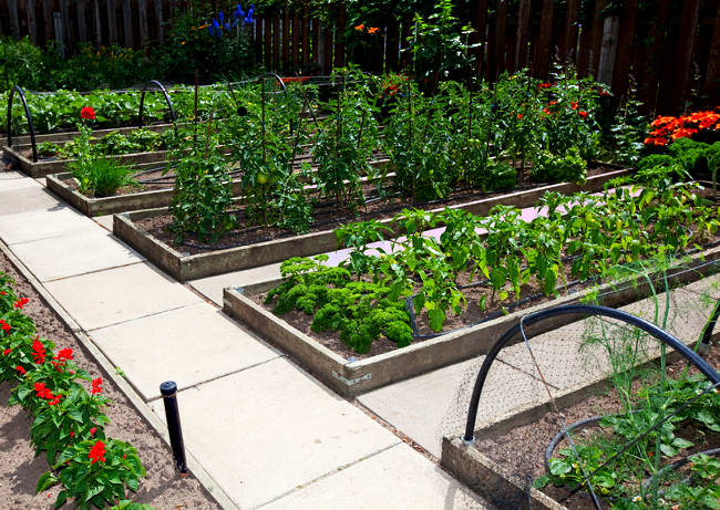 Raised Garden Beds Versus Row Gardening How To Build A House