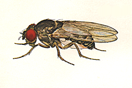 Keep Away Fruit Fly From Your Kitchen And House How To Build A House