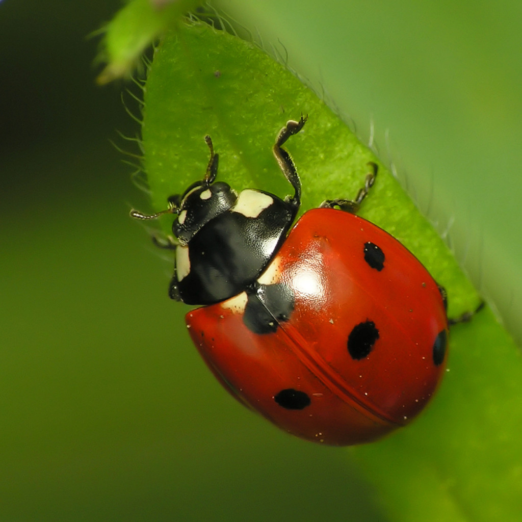 Loft House Design: Attracting Good Bugs To Your Garden