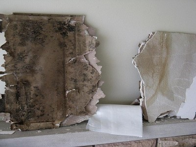 Moldy Drywall Removal