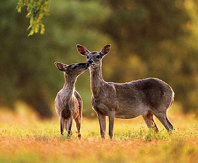 Keeping deer away from your garden tips how to build a - How to keep deer out of garden home remedies ...