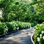 What to Choose for Your Driveway: Pavement or Asphalt?