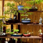 Bonsai – A Symbol of Harmony and Elegance