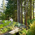 Green Roofs – An Eco Alternative to Traditional Roofs