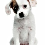 Why You Should Buy a Puppy Older than 2 Months