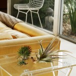 Air Plants – A Stunning Decor Element