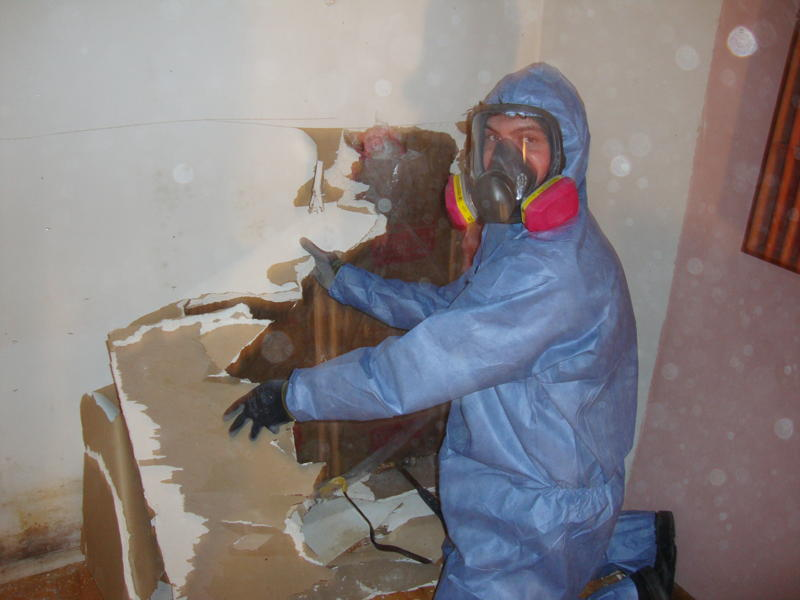 How To Remove And Clean Black Mould