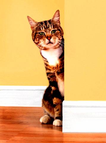 Be Friendly With A Shy Cat In 7 Steps How To Build A House